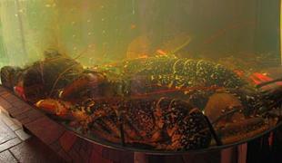 The Aquarium Trade In Marine Fish Omarion, Aquarium For Mussels
